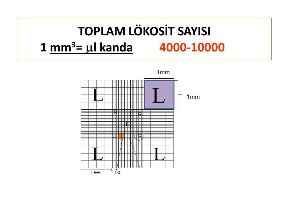 TOPLAM LÖKOSİT SAYISI 1 mm 3 =  l kanda4000-10000 L 1mm