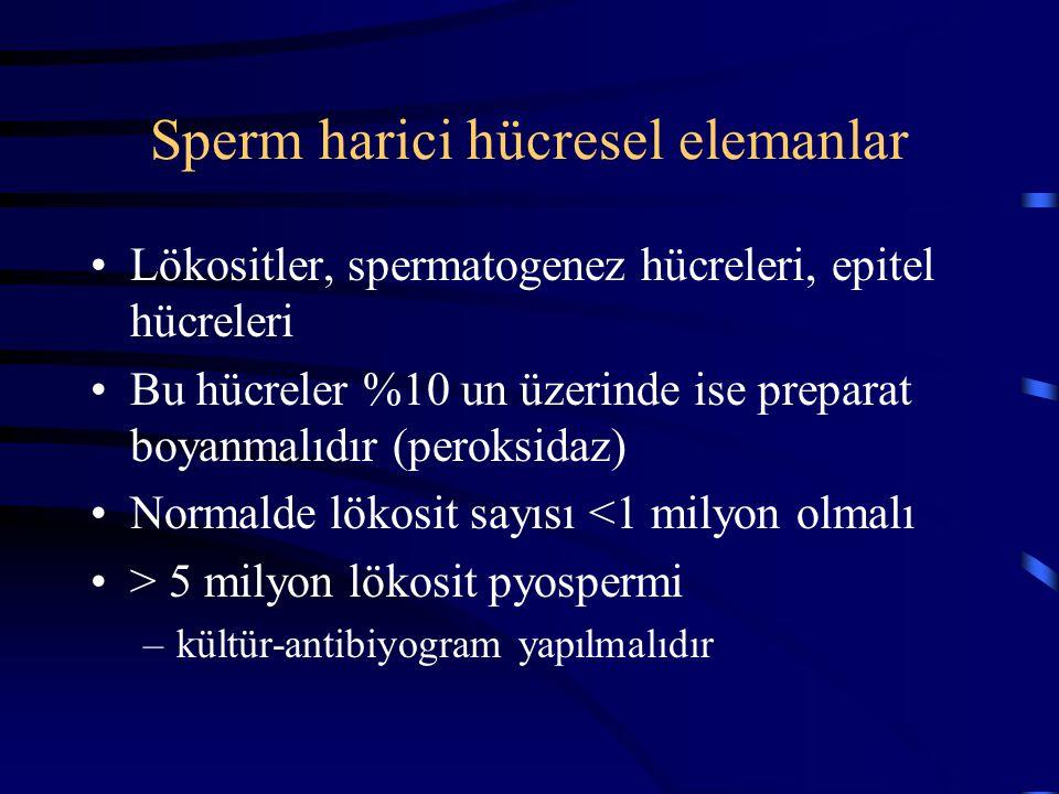 Sperm harici hücresel elemanlar Lökositler, spermatogenez hücreleri, epitel hücreleri Bu hücreler %10 un üzerinde ise preparat boyanmalıdır (peroksida