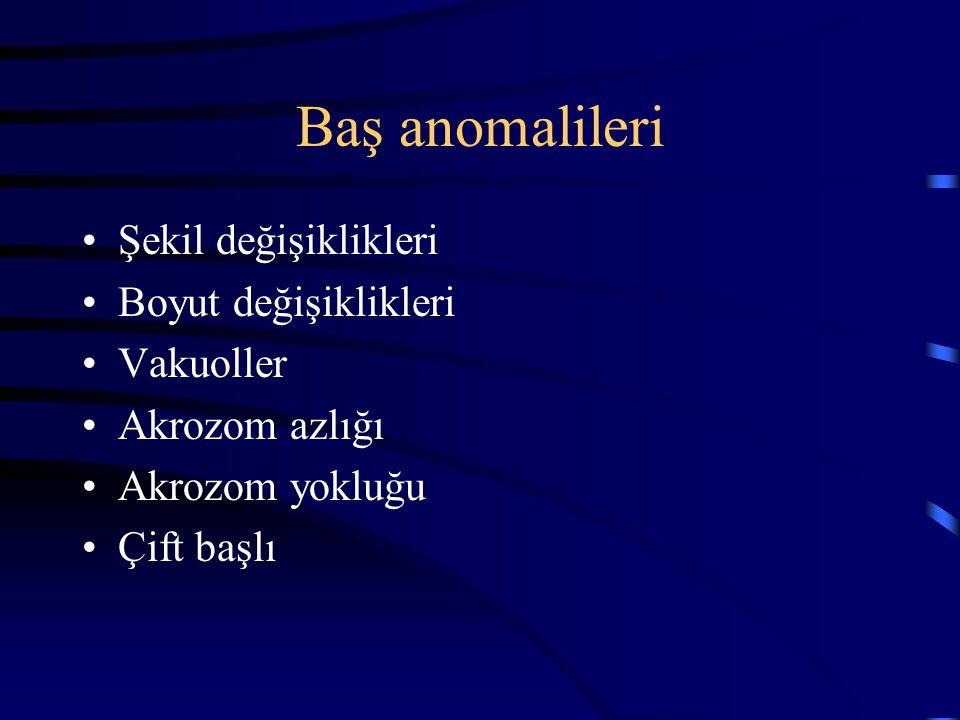 Baş anomalileri Şekil değişiklikleri Boyut değişiklikleri Vakuoller Akrozom azlığı Akrozom yokluğu Çift başlı