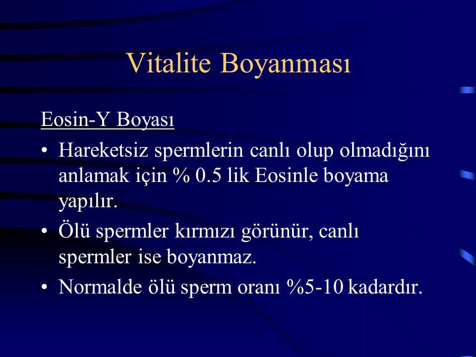 Vitalite Boyanması Eosin-Y Boyası Hareketsiz spermlerin canlı olup olmadığını anlamak için % 0.5 lik Eosinle boyama yapılır. Ölü spermler kırmızı görü