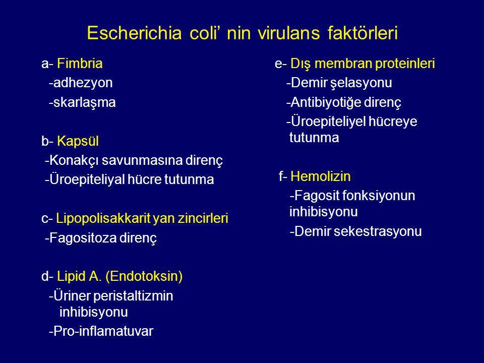 Escherichia coli' nin virulans faktörleri a- Fimbria -adhezyon -skarlaşma b- Kapsül -Konakçı savunmasına direnç -Üroepiteliyal hücre tutunma c- Lipopolisakkarit yan zincirleri -Fagositoza direnç d- Lipid A.