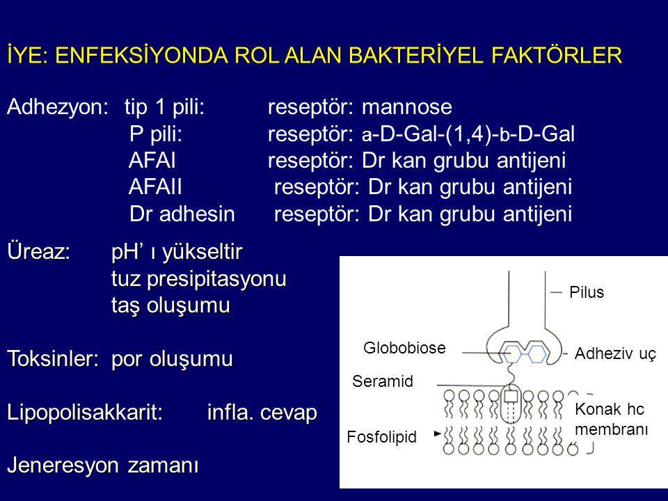 İYE: ENFEKSİYONDA ROL ALAN BAKTERİYEL FAKTÖRLER Adhezyon: tip 1 pili: reseptör: mannose P pili: reseptör: a -D-Gal-(1,4)- b -D-Gal AFAI reseptör: Dr kan grubu antijeni AFAII reseptör: Dr kan grubu antijeni Dr adhesinreseptör: Dr kan grubu antijeni Globobiose Pilus Adheziv uç Seramid Fosfolipid Konak hc membranı Üreaz:pH' ı yükseltir tuz presipitasyonu taş oluşumu Toksinler:por oluşumu Lipopolisakkarit:infla.