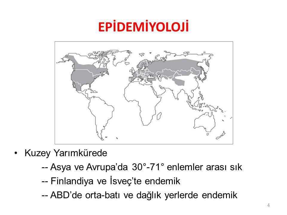 EPİDEMİYOLOJİ 4 Kuzey Yarımkürede -- Asya ve Avrupa'da 30°-71° enlemler arası sık -- Finlandiya ve İsveç'te endemik -- ABD'de orta-batı ve dağlık yerl