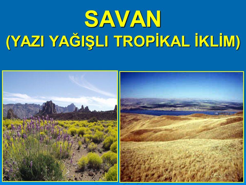  Dönenceler civarındaki subtropikal basınç alanlarında (30° enlemlerinde) görülür.