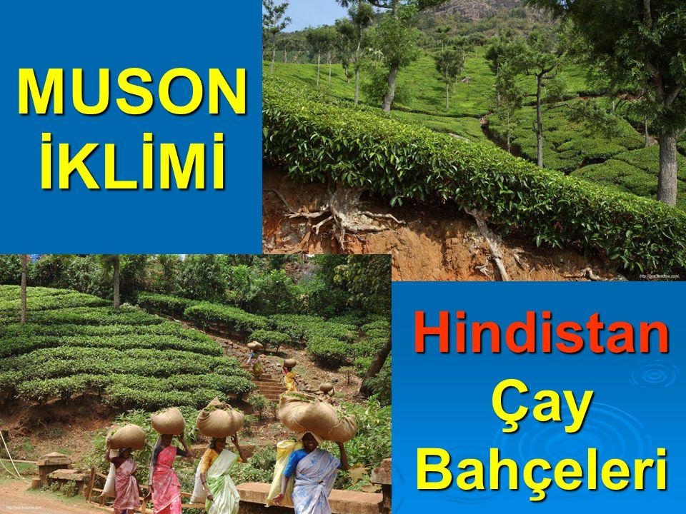 MUSON İKLİMİ Hindistan Çay Bahçeleri