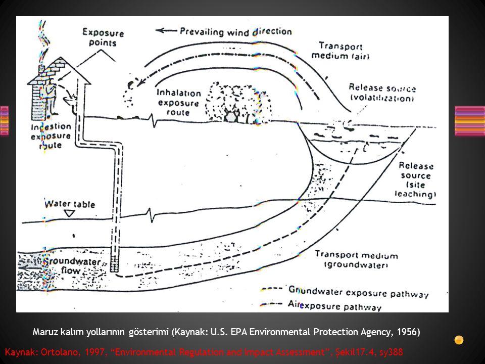 "Maruz kalım yollarının gösterimi (Kaynak: U.S. EPA Environmental Protection Agency, 1956) Kaynak: Ortolano, 1997, ""Environmental Regulation and Impact"