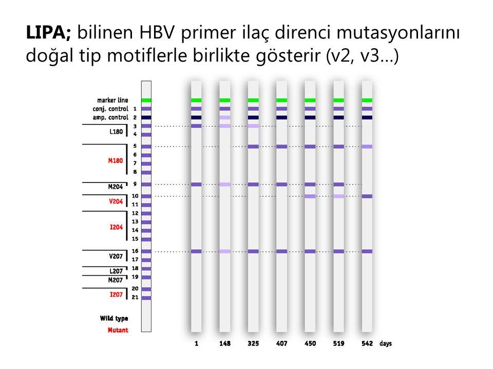 LIPA; bilinen HBV primer ilaç direnci mutasyonlarını doğal tip motiflerle birlikte gösterir (v2, v3…)