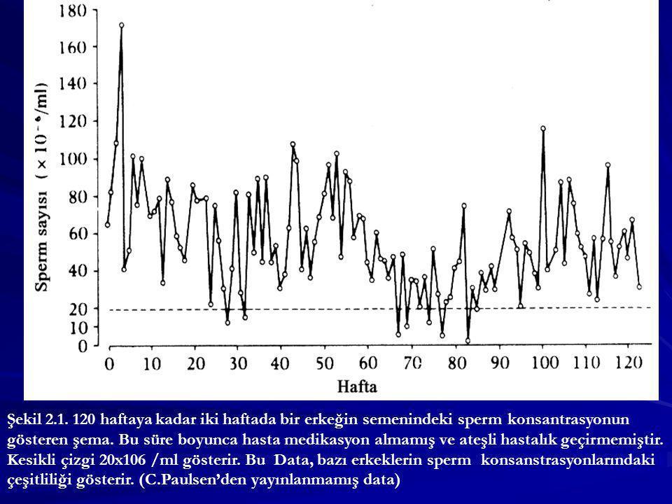 Şekil 2.1. 120 haftaya kadar iki haftada bir erkeğin semenindeki sperm konsantrasyonun gösteren şema. Bu süre boyunca hasta medikasyon almamış ve ateş