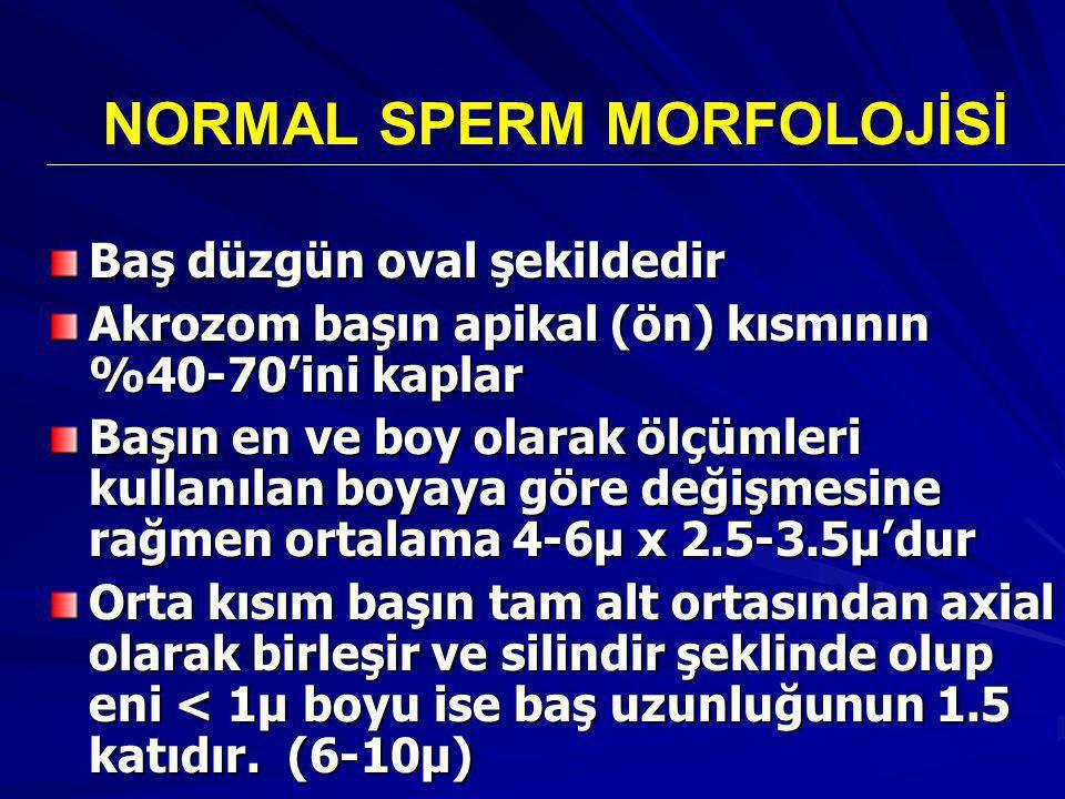 NORMAL SPERM MORFOLOJİSİ Baş düzgün oval şekildedir Akrozom başın apikal (ön) kısmının %40-70'ini kaplar Başın en ve boy olarak ölçümleri kullanılan boyaya göre değişmesine rağmen ortalama 4-6μ x 2.5-3.5μ'dur Orta kısım başın tam alt ortasından axial olarak birleşir ve silindir şeklinde olup eni < 1μ boyu ise baş uzunluğunun 1.5 katıdır.