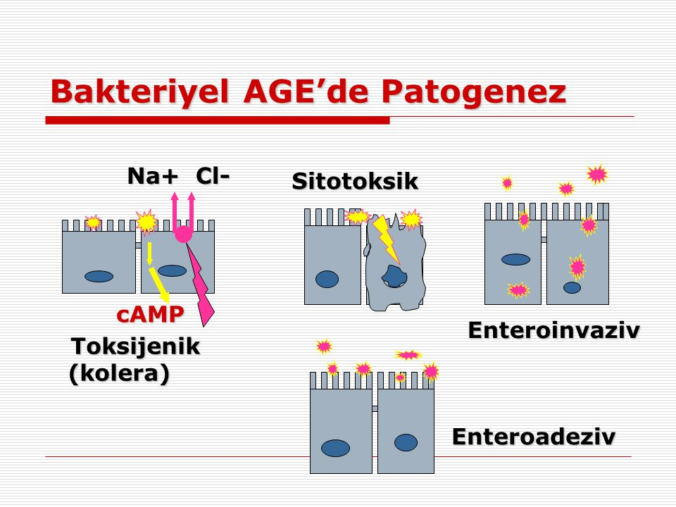 Bakteriyel AGE'de Patogenez Enteroinvaziv Enteroadeziv Sitotoksik Toksijenik (kolera) cAMP Na+ Cl-