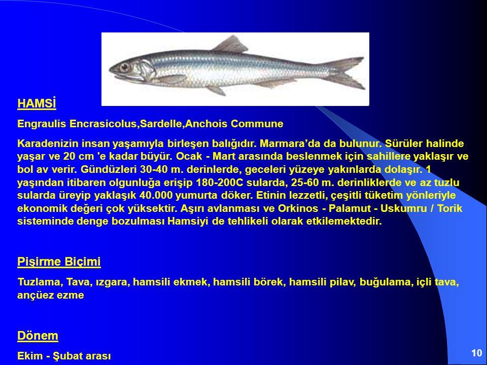 10 HAMSİ Engraulis Encrasicolus,Sardelle,Anchois Commune Karadenizin insan yaşamıyla birleşen balığıdır. Marmara'da da bulunur. Sürüler halinde yaşar