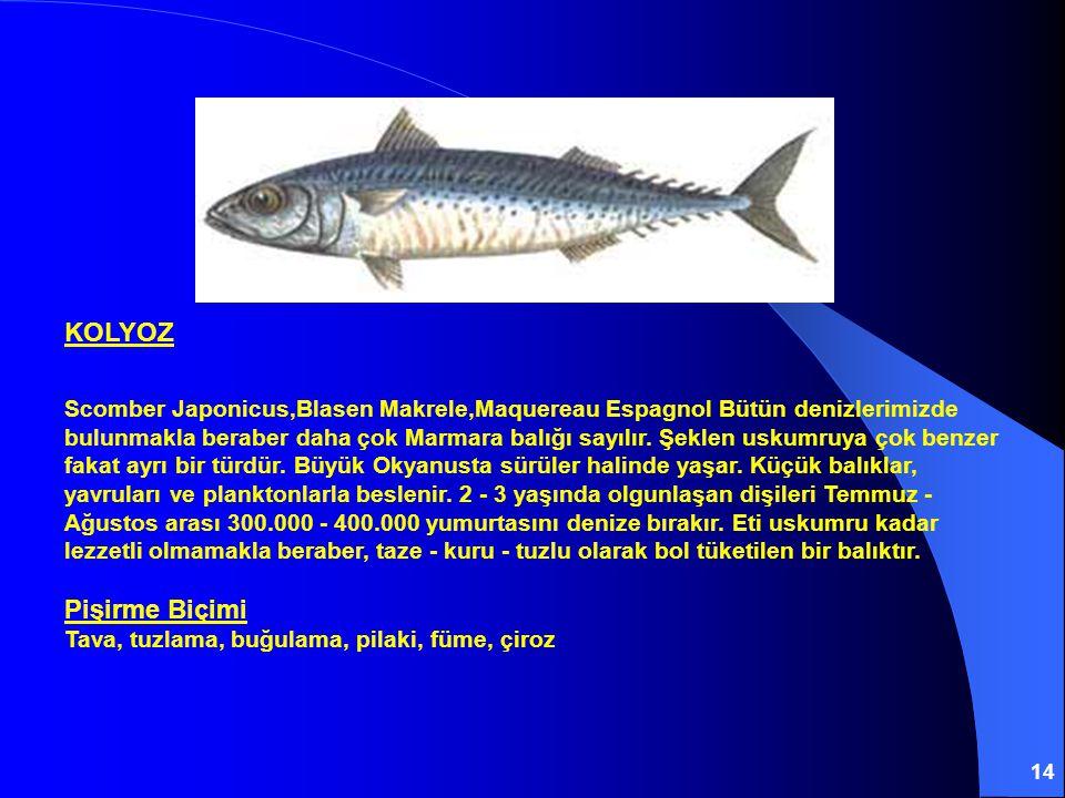 14 KOLYOZ Scomber Japonicus,Blasen Makrele,Maquereau Espagnol Bütün denizlerimizde bulunmakla beraber daha çok Marmara balığı sayılır. Şeklen uskumruy