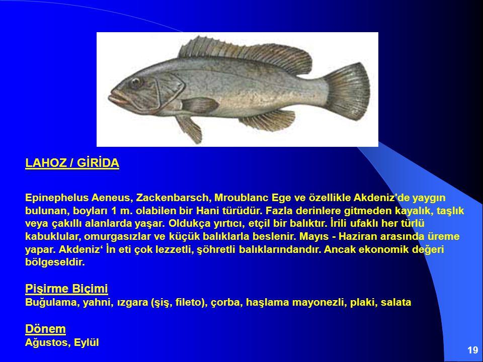 19 LAHOZ / GİRİDA Epinephelus Aeneus, Zackenbarsch, Mroublanc Ege ve özellikle Akdeniz'de yaygın bulunan, boyları 1 m. olabilen bir Hani türüdür. Fazl