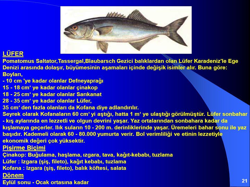 21 LÜFER Pomatomus Saltator,Tassergal,Blaubarsch Gezici balıklardan olan Lüfer Karadeniz le Ege Denizi arasında dolaşır, büyümesinin aşamaları içinde değişik isimler alır.