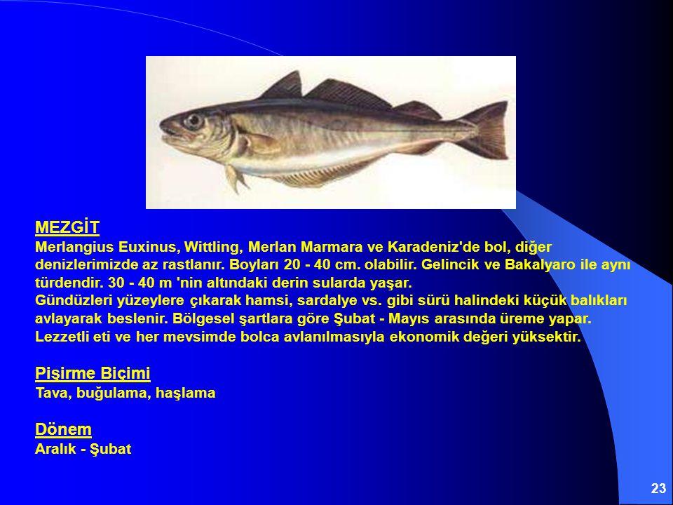 23 MEZGİT Merlangius Euxinus, Wittling, Merlan Marmara ve Karadeniz'de bol, diğer denizlerimizde az rastlanır. Boyları 20 - 40 cm. olabilir. Gelincik