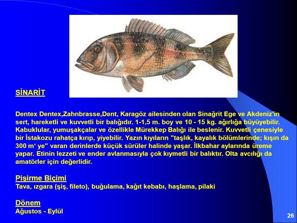 26 SİNARİT Dentex Dentex,Zahnbrasse,Dent' Karagöz ailesinden olan Sinağrit Ege ve Akdeniz'in sert, hareketli ve kuvvetli bir balığıdır. 1-1,5 m. boy v