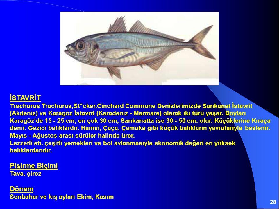 28 İSTAVRİT Trachurus Trachurus,St cker,Cinchard Commune Denizlerimizde Sarıkanat İstavrit (Akdeniz) ve Karagöz İstavrit (Karadeniz - Marmara) olarak iki türü yaşar.