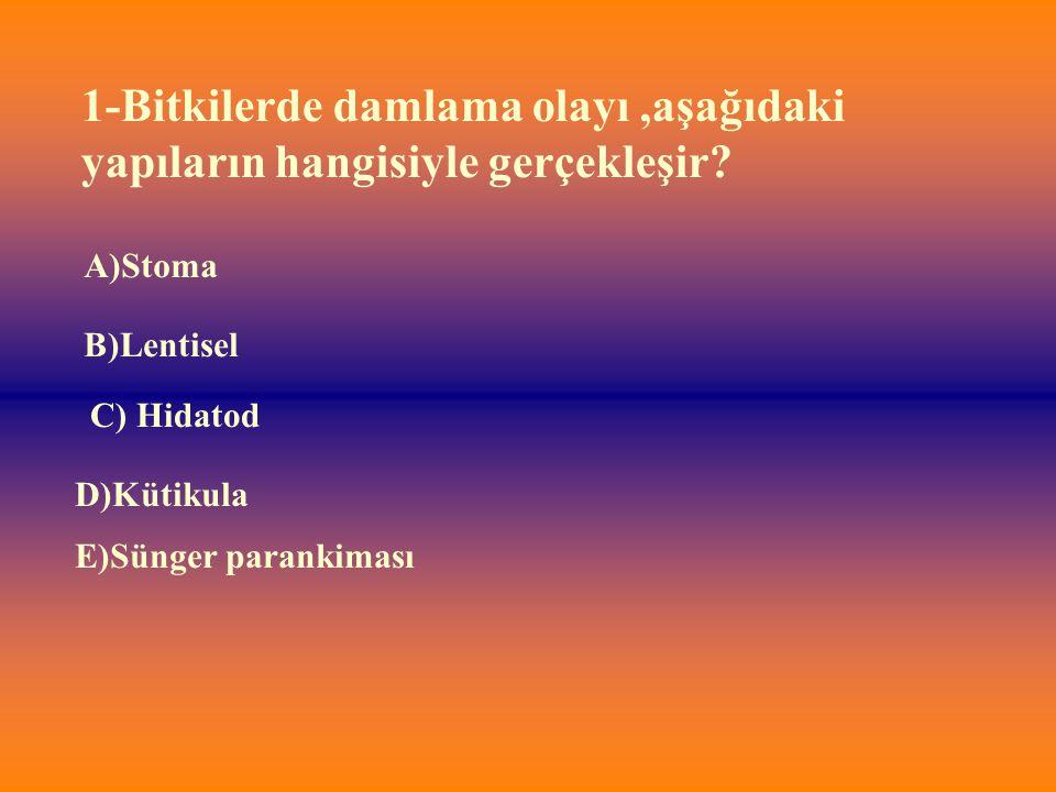E)Sünger parankiması 1-Bitkilerde damlama olayı,aşağıdaki yapıların hangisiyle gerçekleşir? A)Stoma B)Lentisel D)Kütikula C) Hidatod