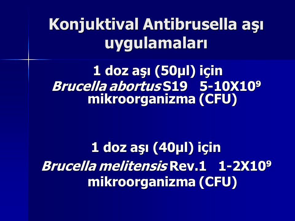 Konjuktival Antibrusella aşı uygulamaları 1 doz aşı (50µl) için 1 doz aşı (50µl) için Brucella abortus S19 5-10X10 9 mikroorganizma (CFU) 1 doz aşı (40µl) için Brucella melitensis Rev.1 1-2X10 9 mikroorganizma (CFU)