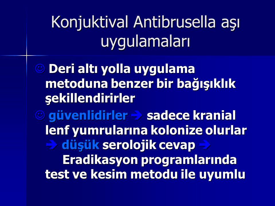 Konjuktival Antibrusella aşı uygulamaları Deri altı yolla uygulama metoduna benzer bir bağışıklık şekillendirirler Deri altı yolla uygulama metoduna b