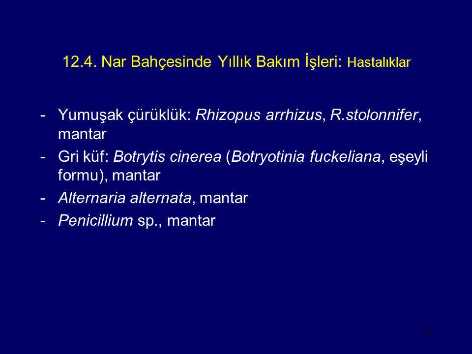 28 12.4. Nar Bahçesinde Yıllık Bakım İşleri: Hastalıklar -Yumuşak çürüklük: Rhizopus arrhizus, R.stolonnifer, mantar -Gri küf: Botrytis cinerea (Botry