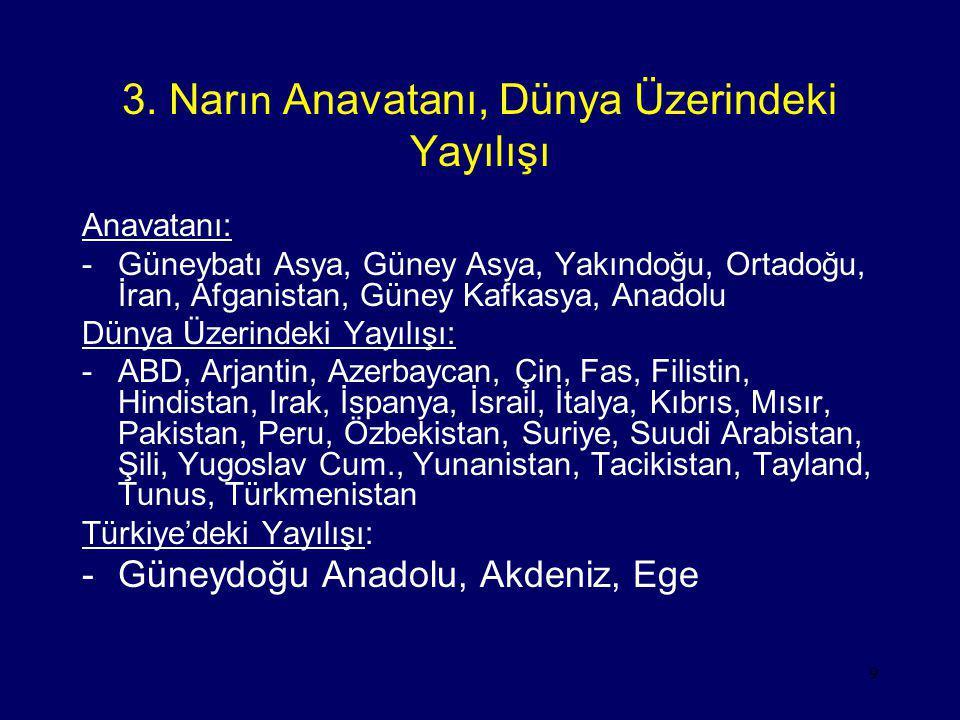 9 3. Nar ın Anavatanı, Dünya Üzerindeki Yayılışı Anavatanı: -Güneybatı Asya, Güney Asya, Yakındoğu, Ortadoğu, İran, Afganistan, Güney Kafkasya, Anadol