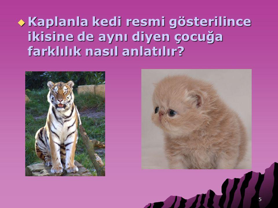 5  Kaplanla kedi resmi gösterilince ikisine de aynı diyen çocuğa farklılık nasıl anlatılır?