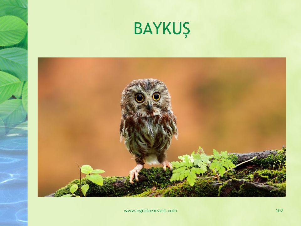BAYKUŞ www.egitimzirvesi.com102