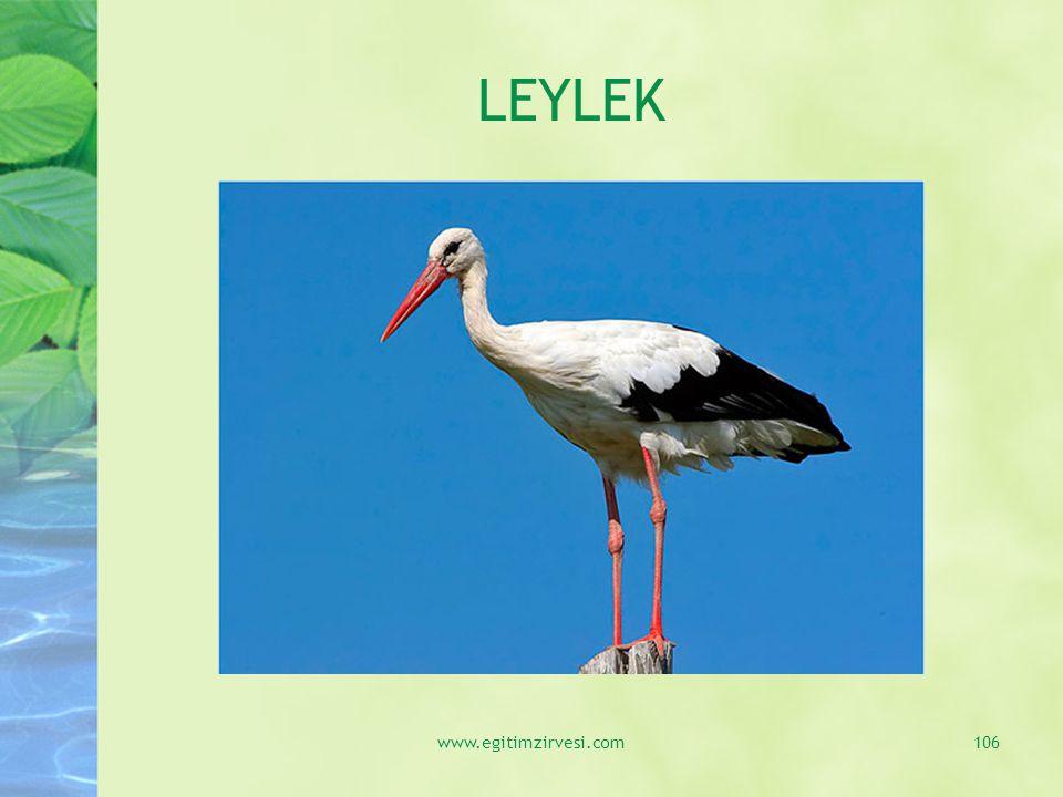 LEYLEK www.egitimzirvesi.com106