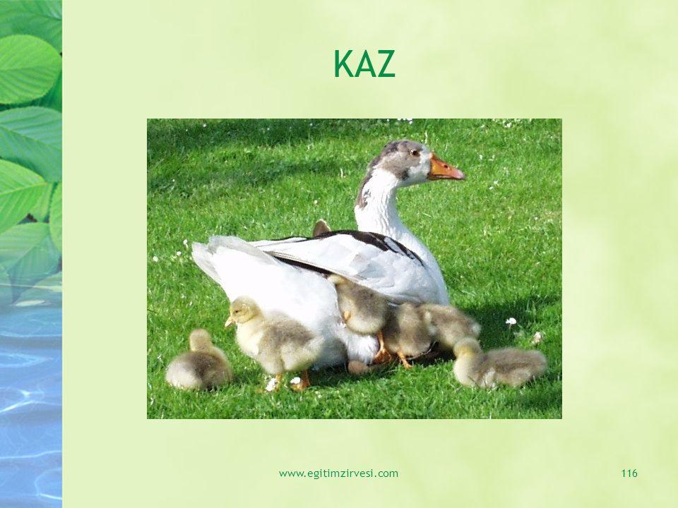 KAZ www.egitimzirvesi.com116