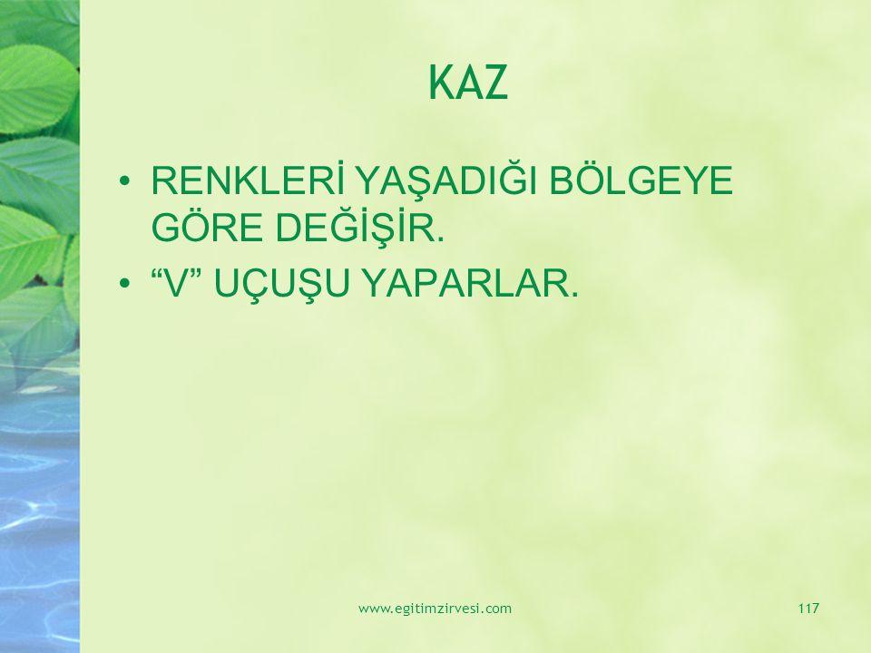 """KAZ RENKLERİ YAŞADIĞI BÖLGEYE GÖRE DEĞİŞİR. """"V"""" UÇUŞU YAPARLAR. www.egitimzirvesi.com117"""