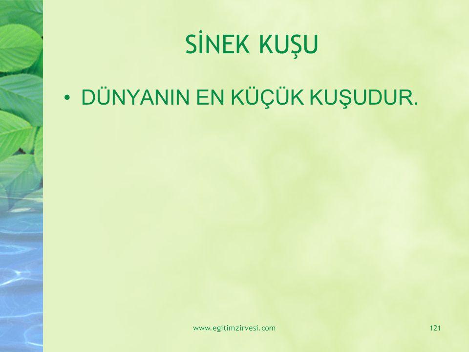 SİNEK KUŞU DÜNYANIN EN KÜÇÜK KUŞUDUR. www.egitimzirvesi.com121