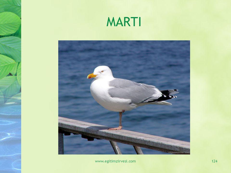 MARTI www.egitimzirvesi.com124