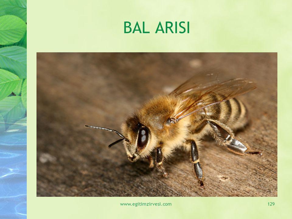 BAL ARISI www.egitimzirvesi.com129