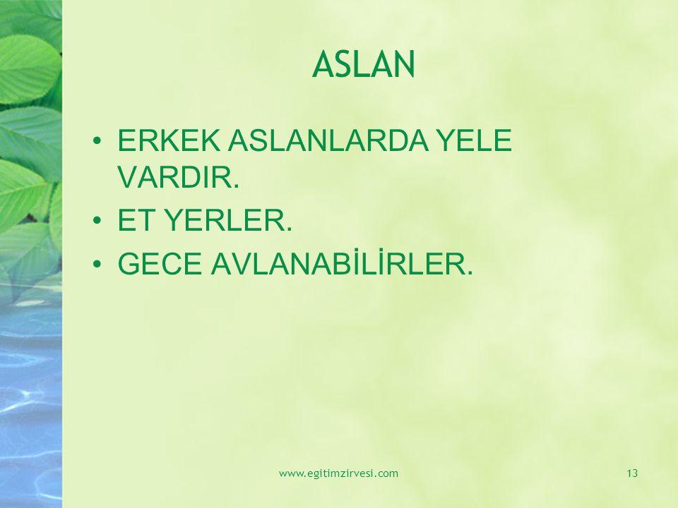 ASLAN ERKEK ASLANLARDA YELE VARDIR. ET YERLER. GECE AVLANABİLİRLER. www.egitimzirvesi.com13