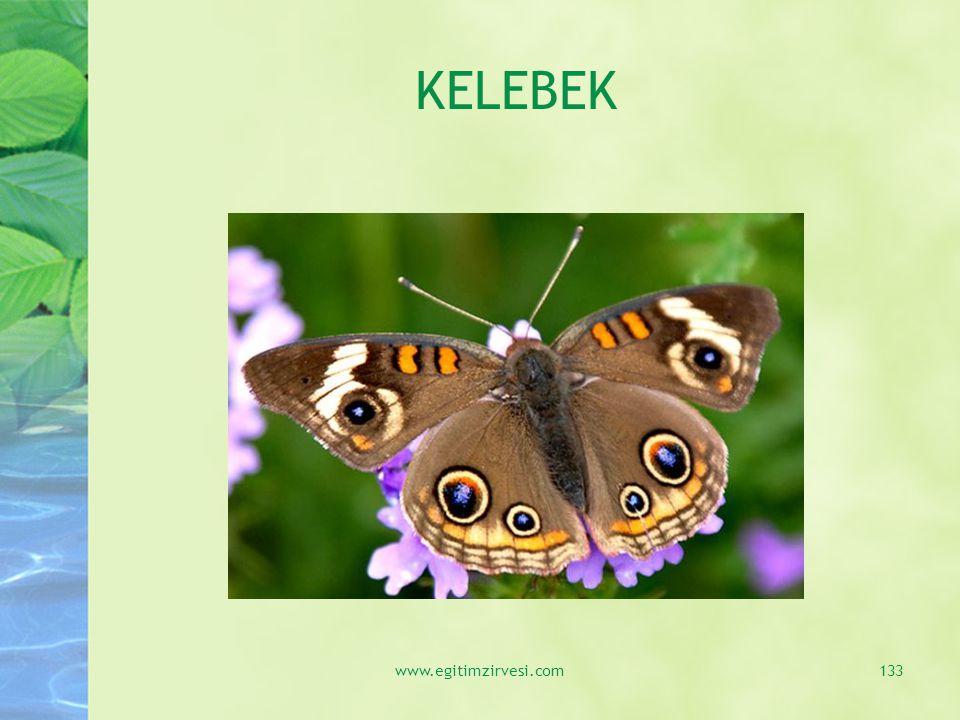 KELEBEK www.egitimzirvesi.com133