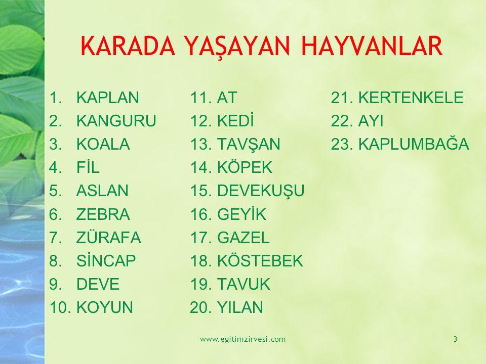 GEYİK www.egitimzirvesi.com34