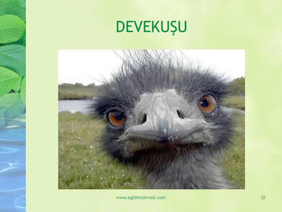 DEVEKUŞU www.egitimzirvesi.com32