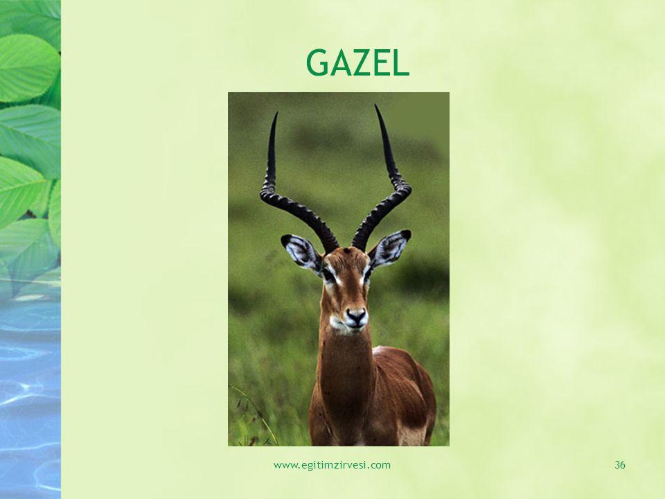 GAZEL www.egitimzirvesi.com36
