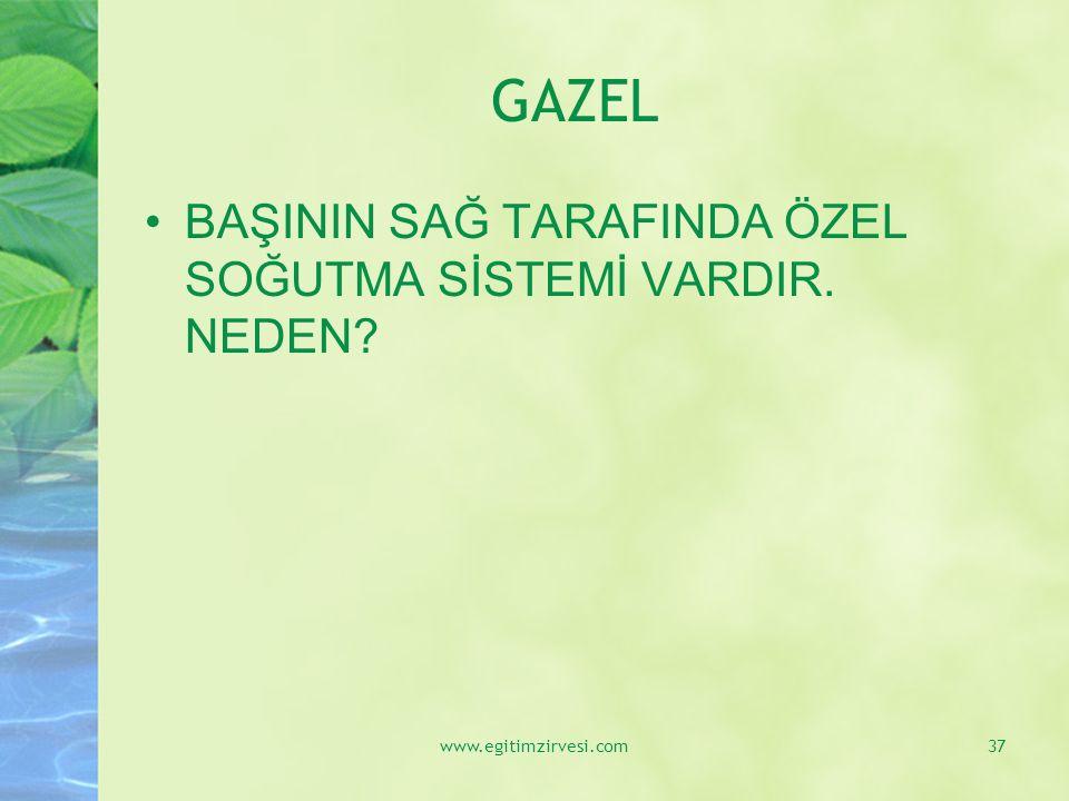 GAZEL BAŞININ SAĞ TARAFINDA ÖZEL SOĞUTMA SİSTEMİ VARDIR. NEDEN? www.egitimzirvesi.com37