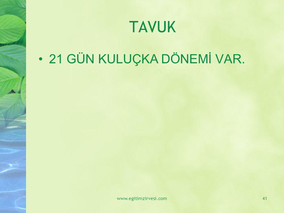 TAVUK 21 GÜN KULUÇKA DÖNEMİ VAR. www.egitimzirvesi.com41