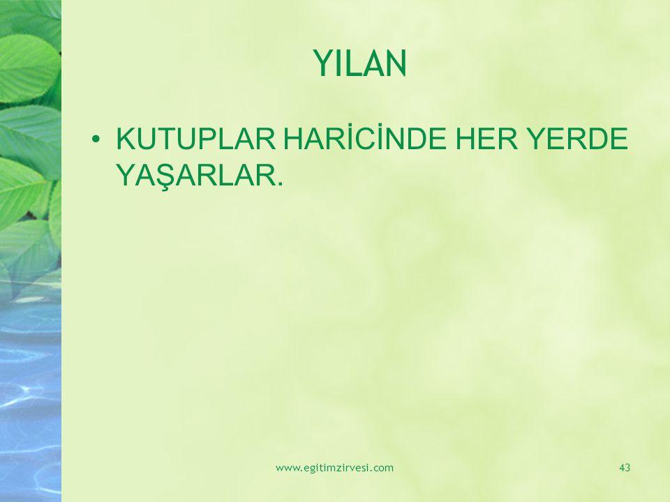 YILAN KUTUPLAR HARİCİNDE HER YERDE YAŞARLAR. www.egitimzirvesi.com43