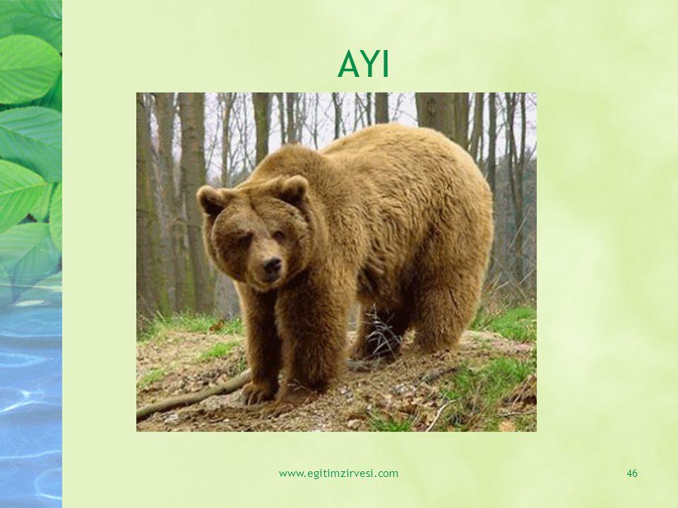 AYI www.egitimzirvesi.com46