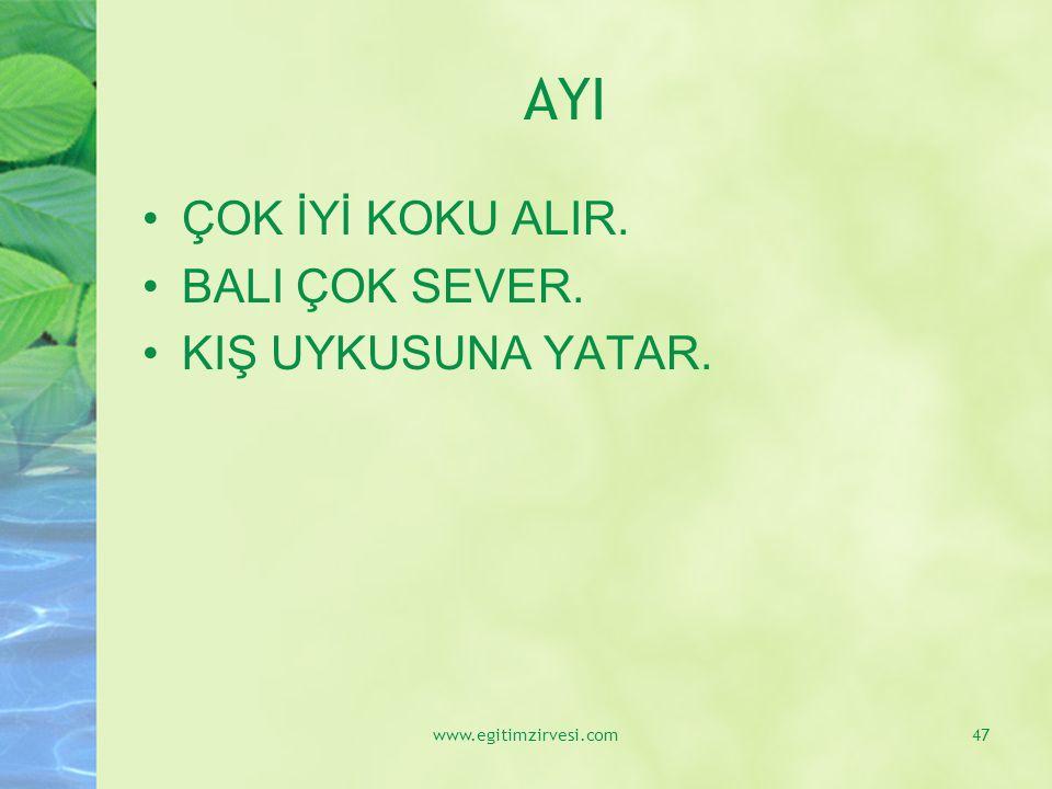 AYI ÇOK İYİ KOKU ALIR. BALI ÇOK SEVER. KIŞ UYKUSUNA YATAR. www.egitimzirvesi.com47