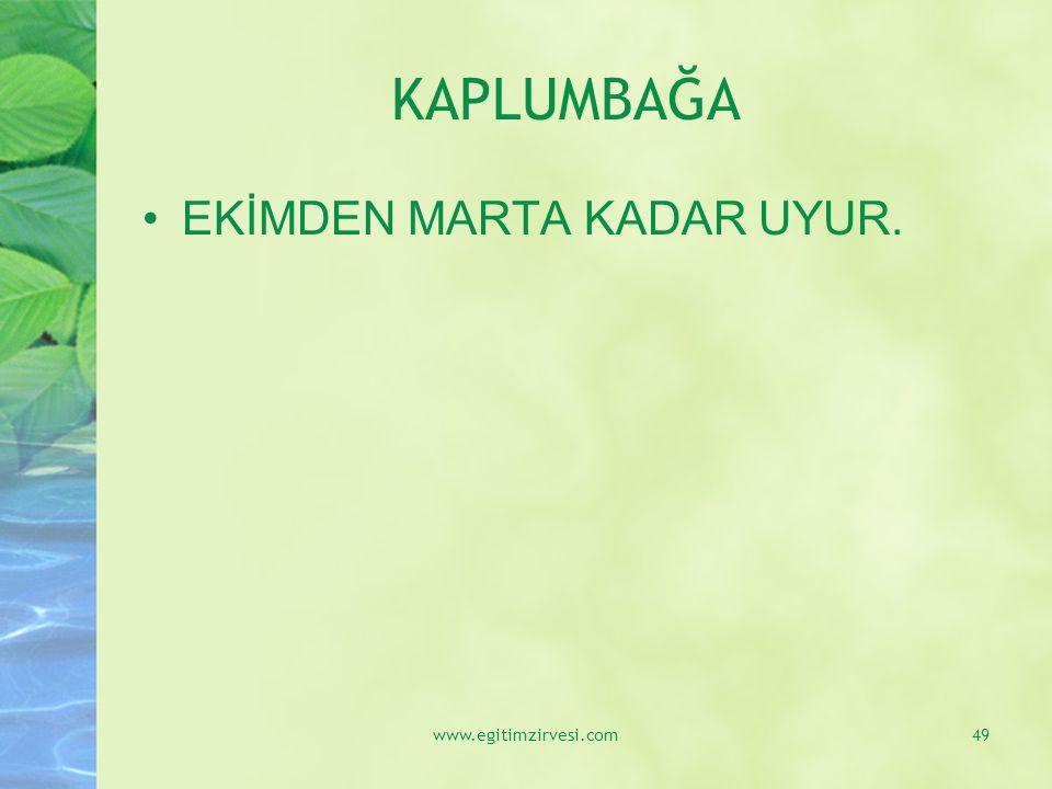 KAPLUMBAĞA EKİMDEN MARTA KADAR UYUR. www.egitimzirvesi.com49