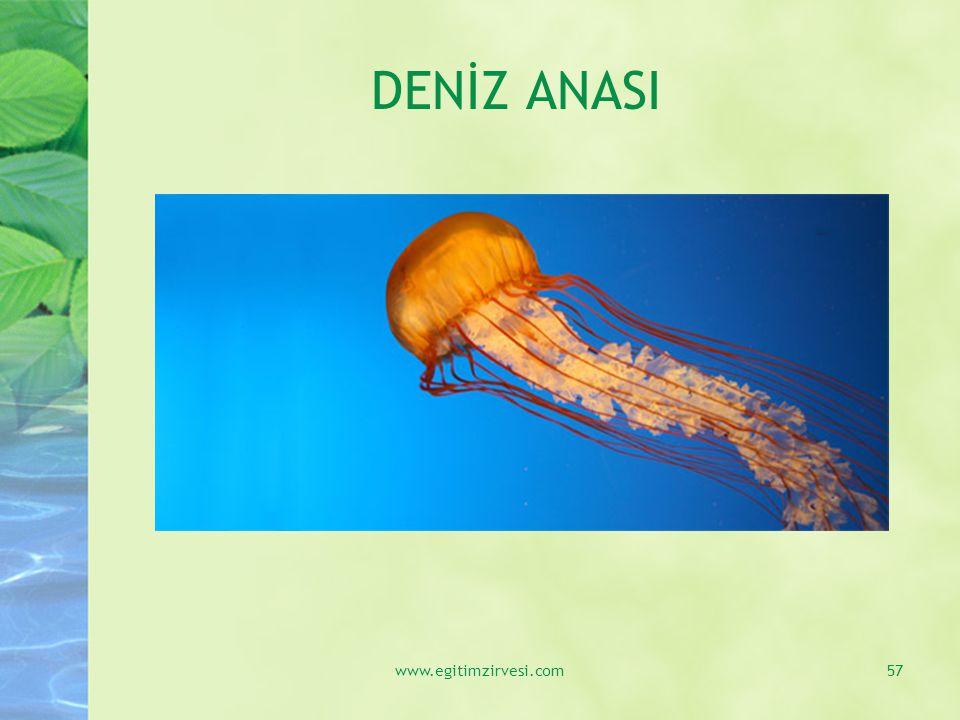 DENİZ ANASI www.egitimzirvesi.com57