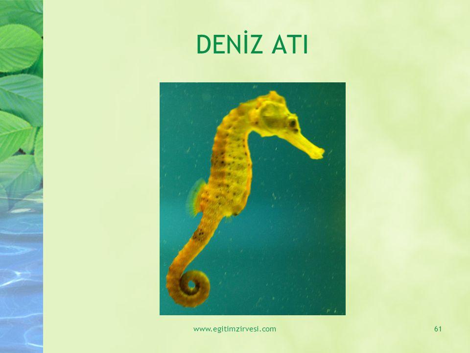 DENİZ ATI www.egitimzirvesi.com61