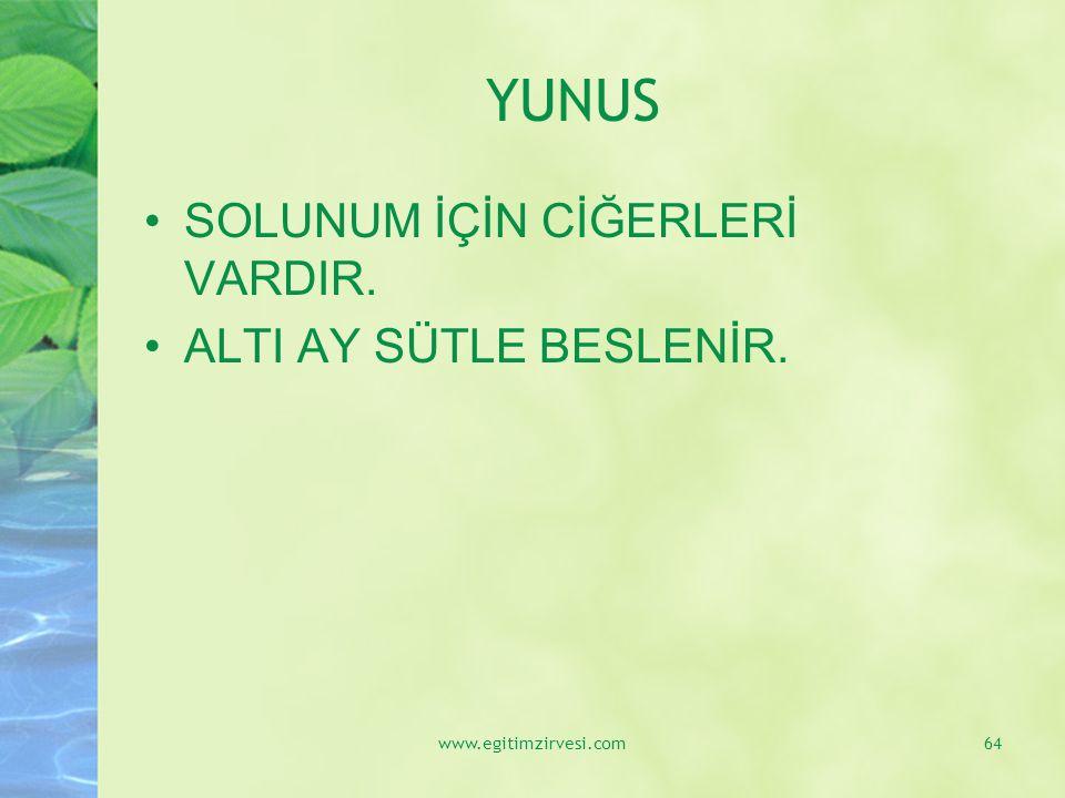 YUNUS SOLUNUM İÇİN CİĞERLERİ VARDIR. ALTI AY SÜTLE BESLENİR. www.egitimzirvesi.com64