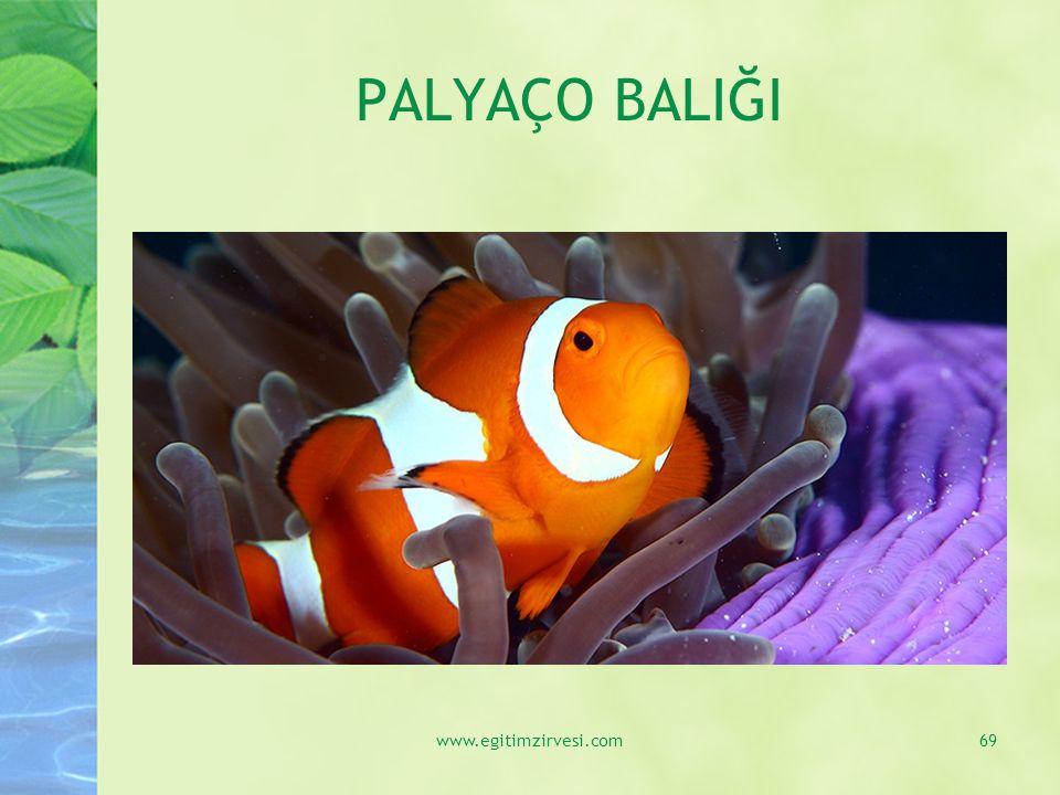 PALYAÇO BALIĞI www.egitimzirvesi.com69