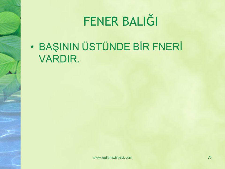 FENER BALIĞI BAŞININ ÜSTÜNDE BİR FNERİ VARDIR. www.egitimzirvesi.com75